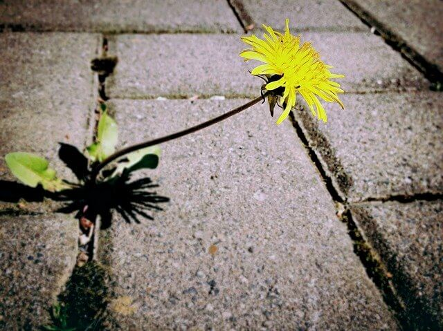 How to stop weeds in block paving