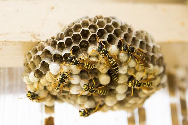 How To Remove A Wasps Nest Naturally