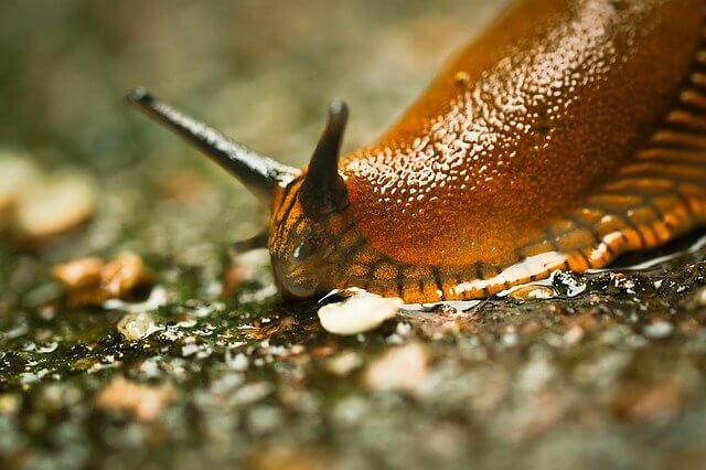 Why Do Slugs Come into My House and How To Get Rid of Them?